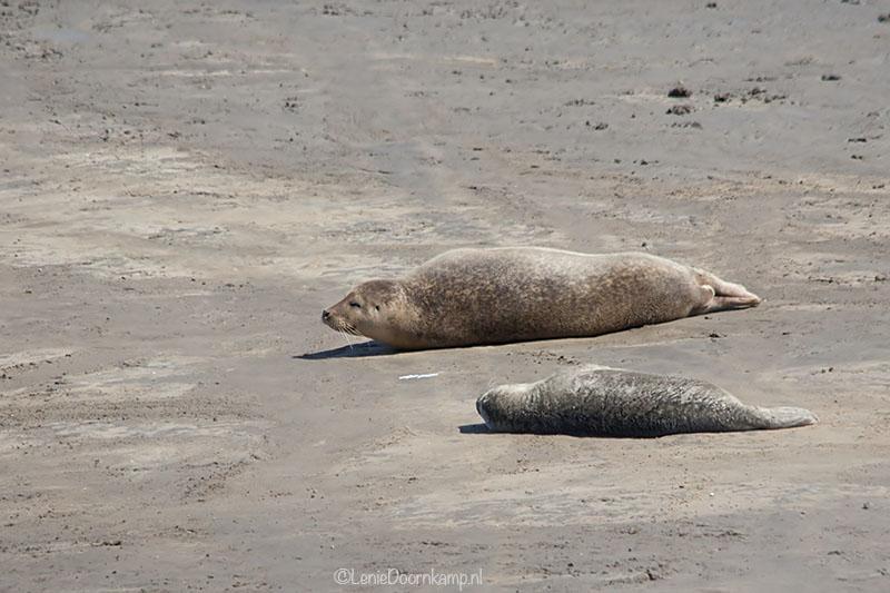 20140622-zeehonden