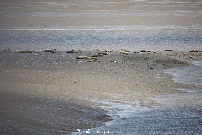 20140622-zeehonden2