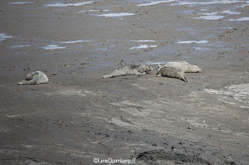 20140622-zeehonden3