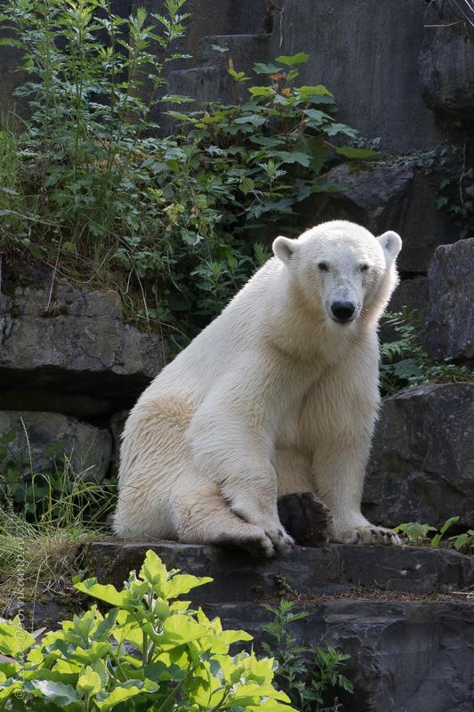 20150625-ijsbeer-5