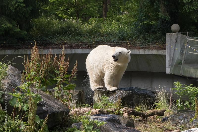 20150625-ijsbeer