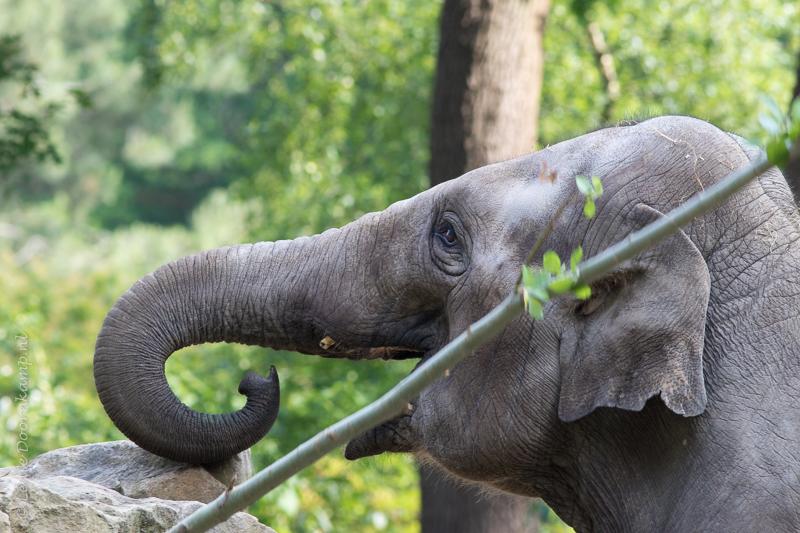 20150625-olifanten