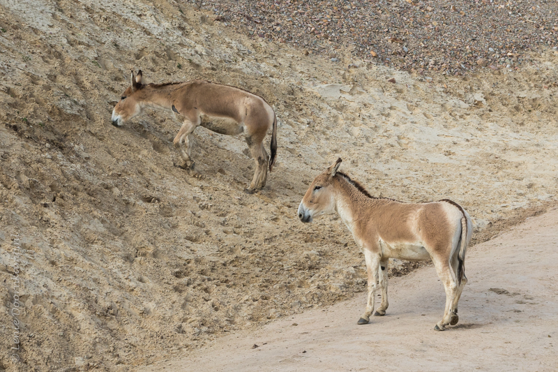 20160313-onagers