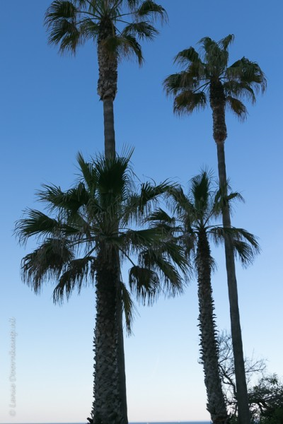 20160426-palmbomen