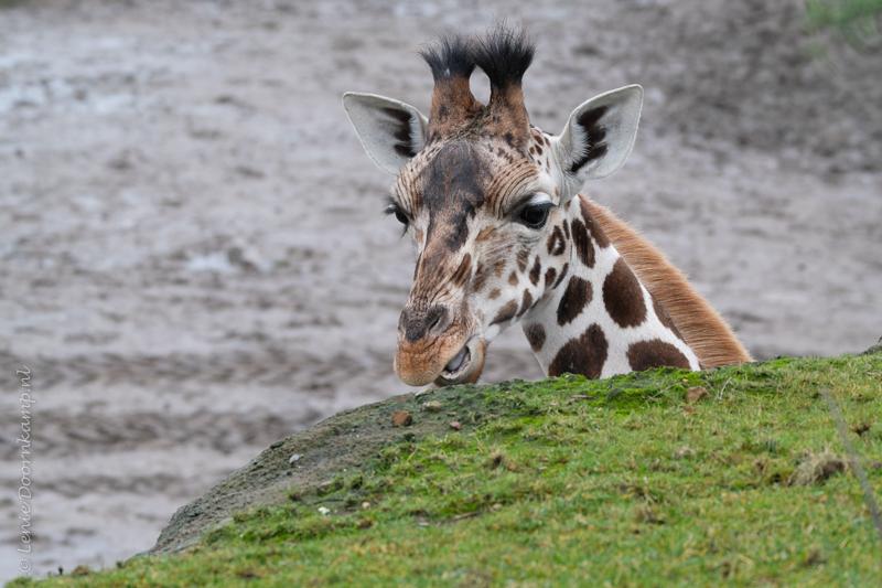 20161222-giraf-2