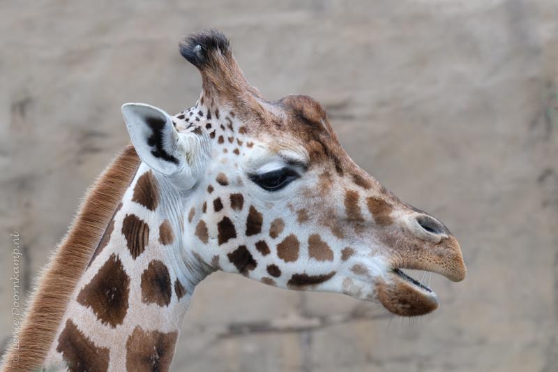 20161222-giraf-3