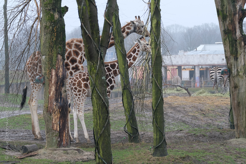 20161222-giraf