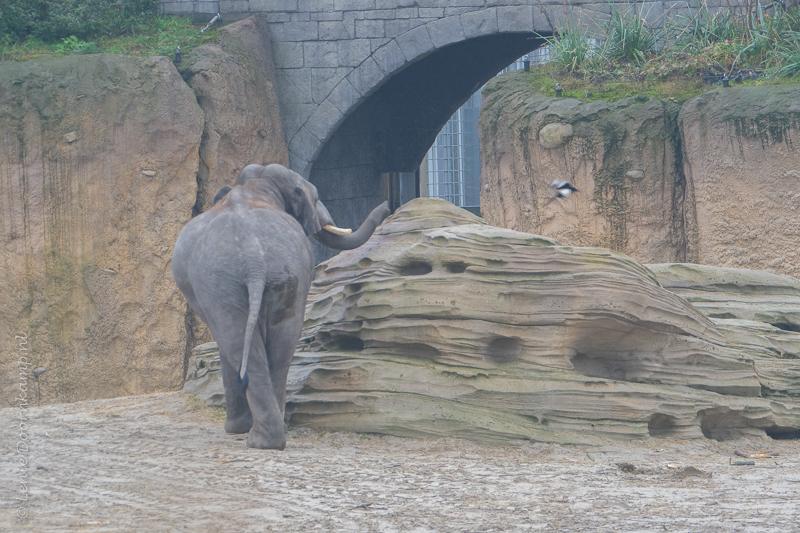 20161222-olifant-3