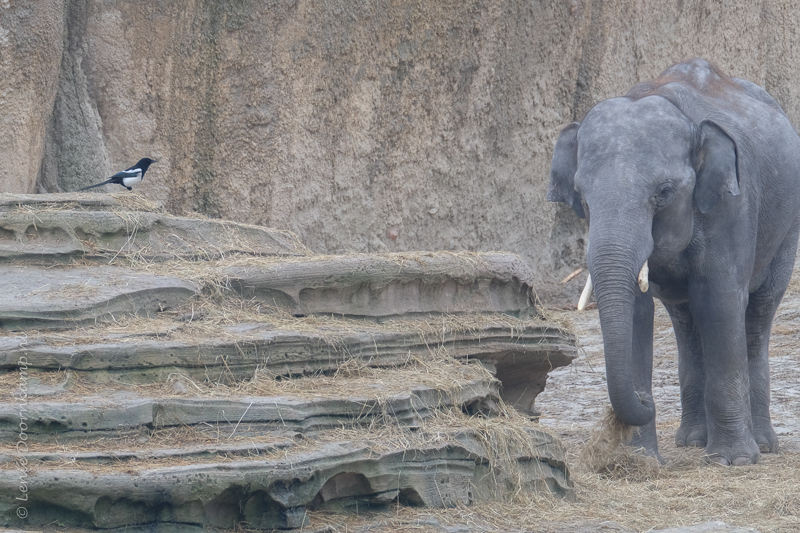 20161222-olifant