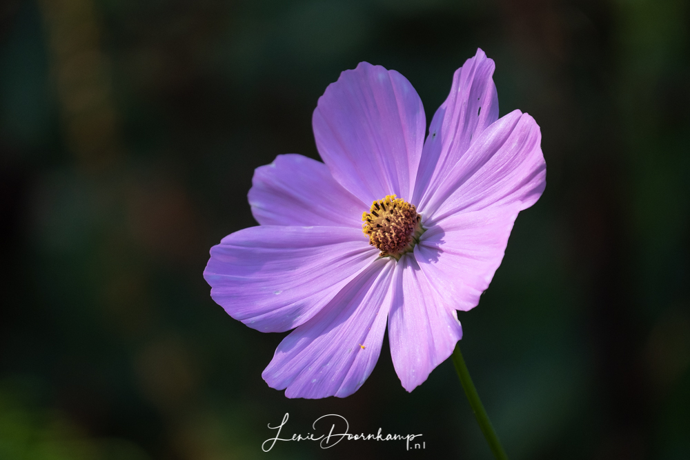 bloem in licht