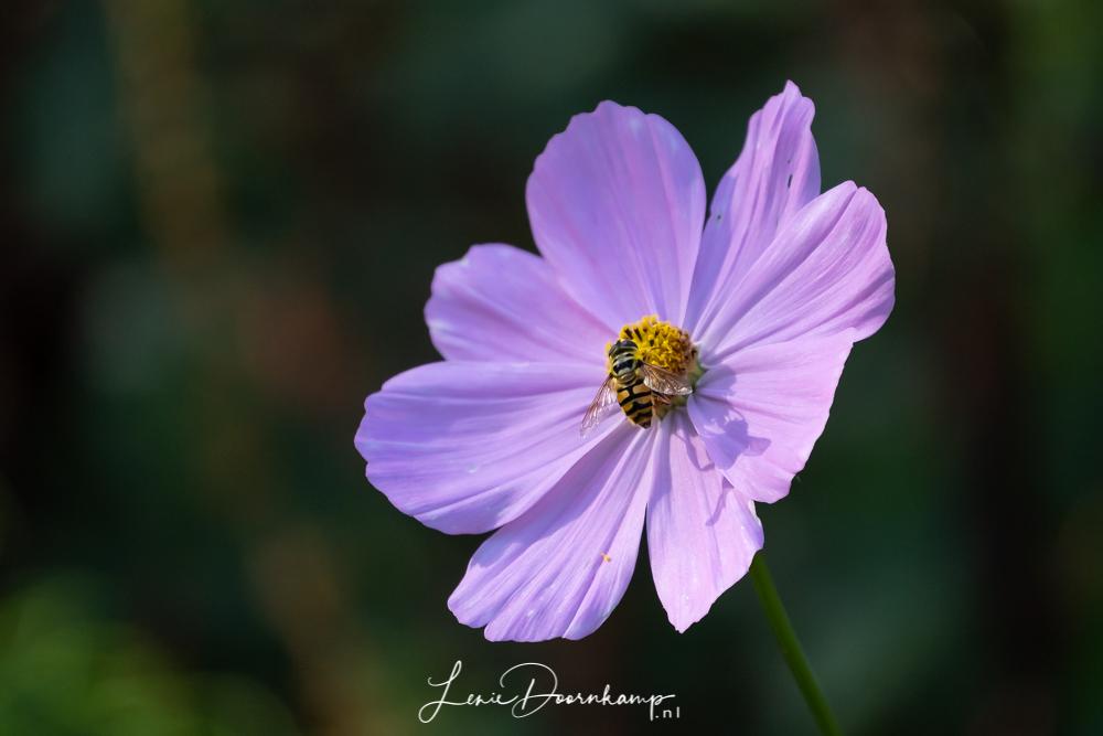 bloem met bij