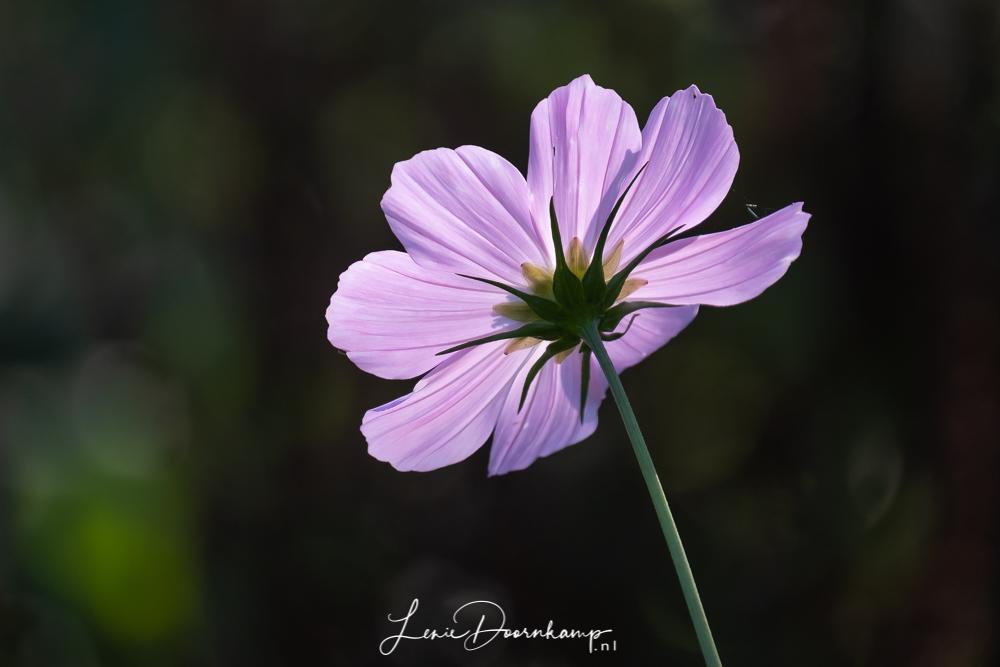 bloem in tegenlicht
